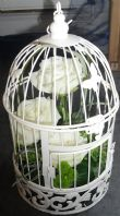 Bird's Cage in Ivory & Sage